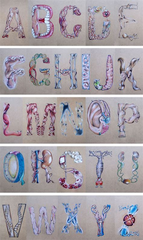 B Is For Buttcheeks: Human Anatomy Inspired Alphabet