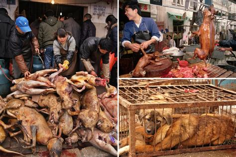 Wet Markets In China Are Still Selling Dog Meat Despite