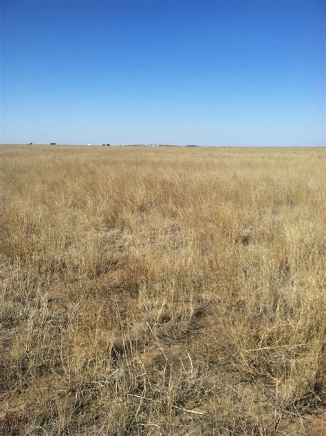 CRP Land for Sale in Carson Co